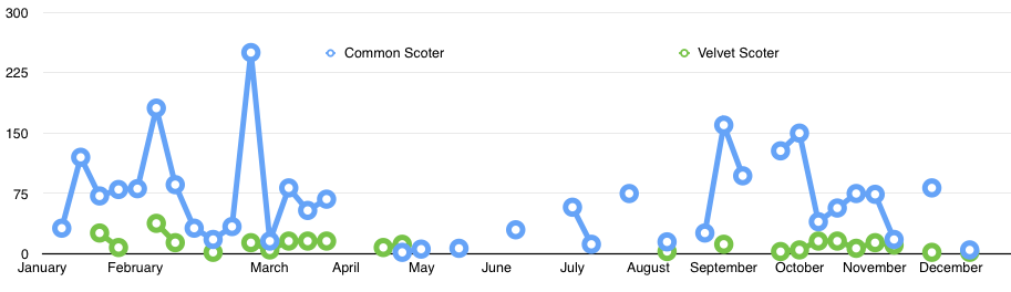 Weekly Common and Velvet Scoter numbers around Findhorn in 2015
